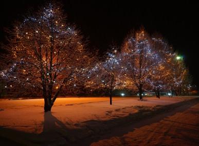 Les arbres illuminés à côté du Bureau d'Accueil Touristique