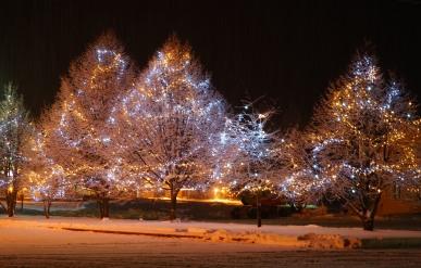Les arbres illuminés : c'est magnifique !
