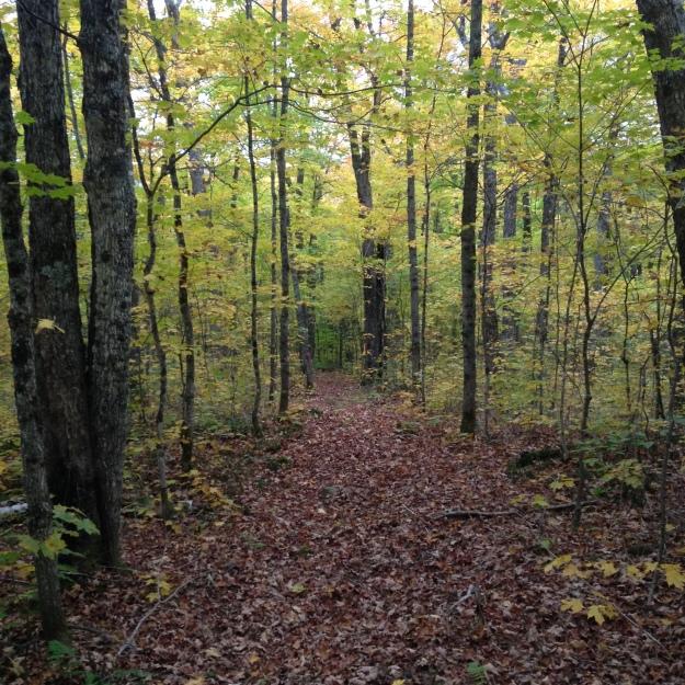 La sérénité de la forêt